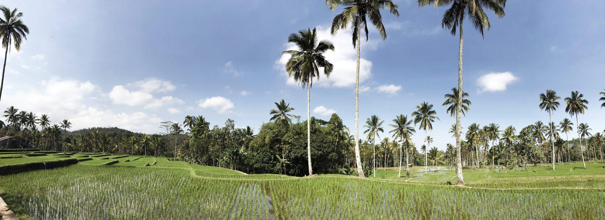 15 JAWA r1 - Jawa: wulkan Ijen, Bromo, Yogyakarta i świątynie