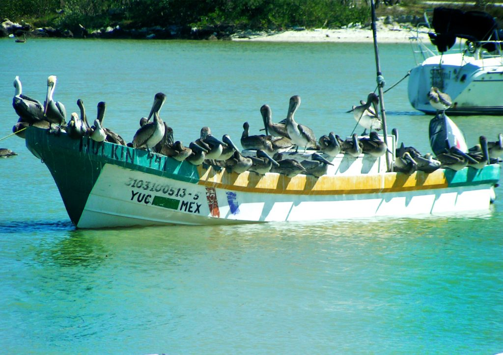 Celestun1 1024x724 - Meksyk - Jukatan - plaże i cenoty