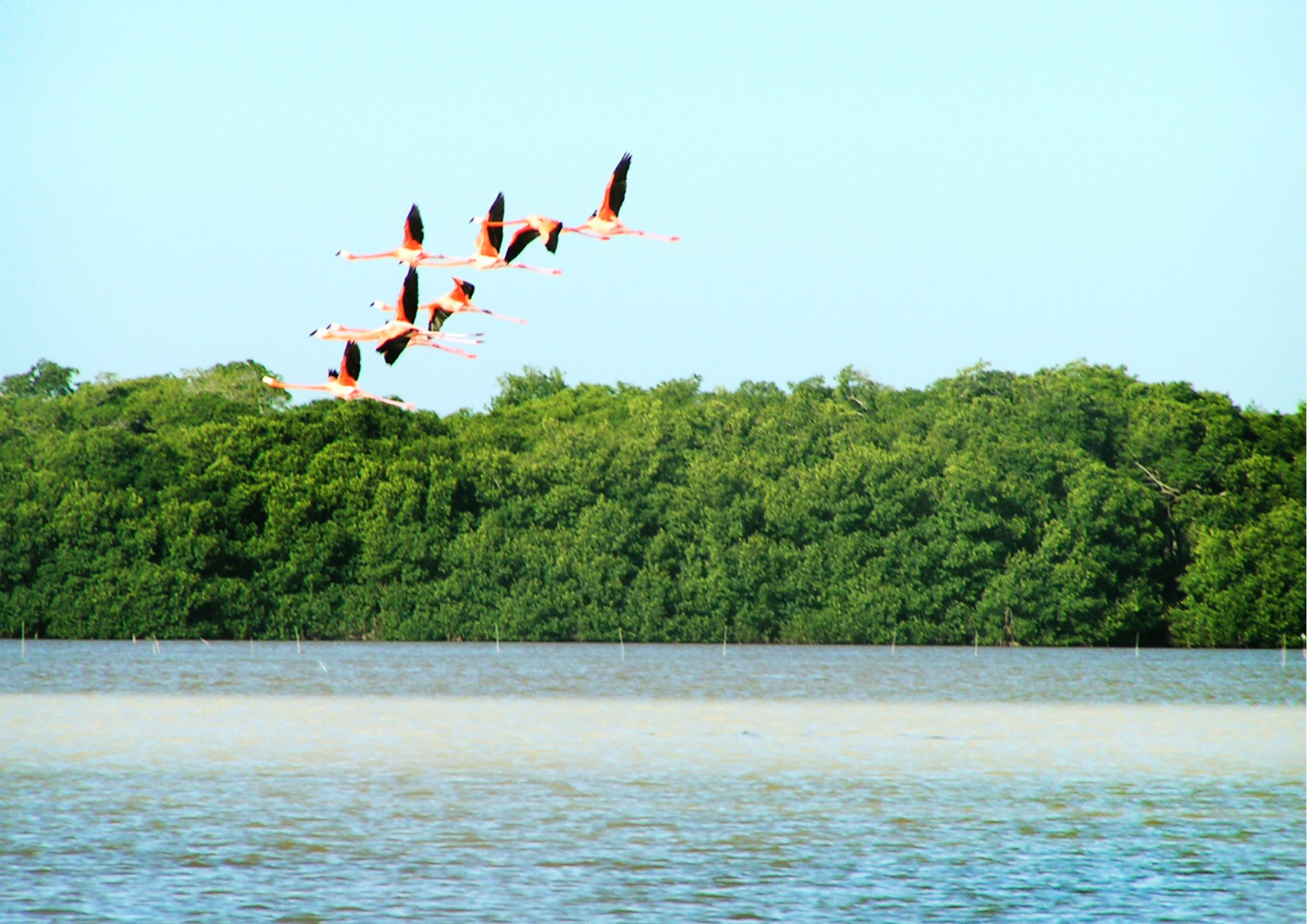 Celestun9 - Meksyk - Jukatan - plaże i cenoty