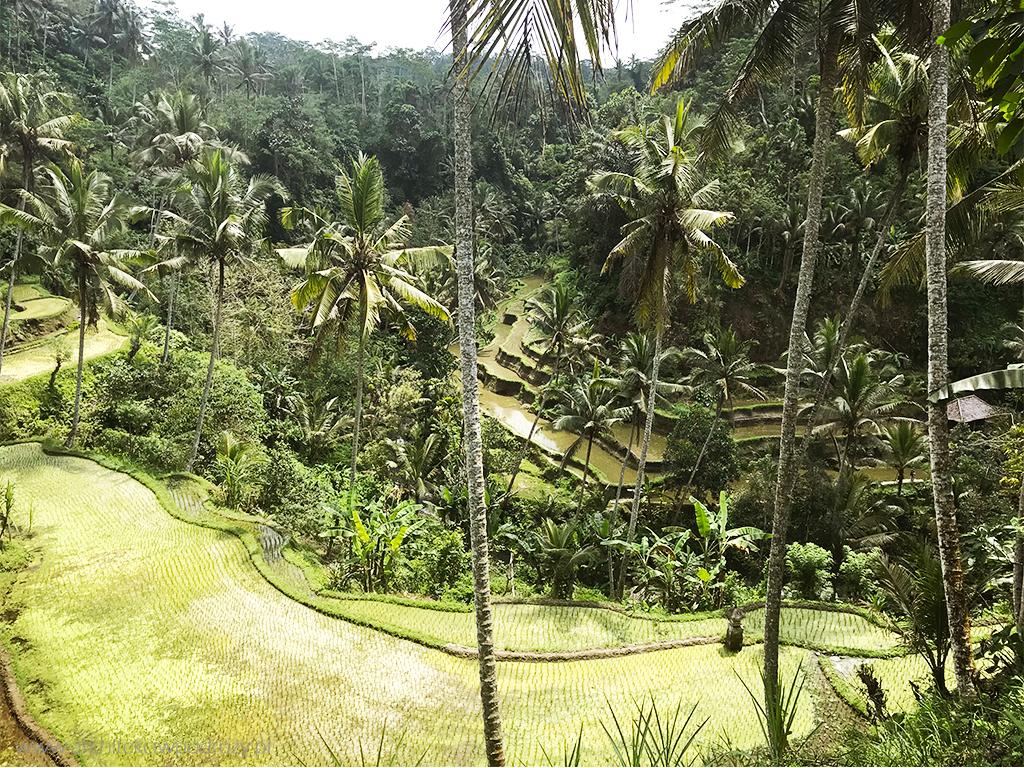 swiatynia2 bali - Bali i Nusa Lembongan