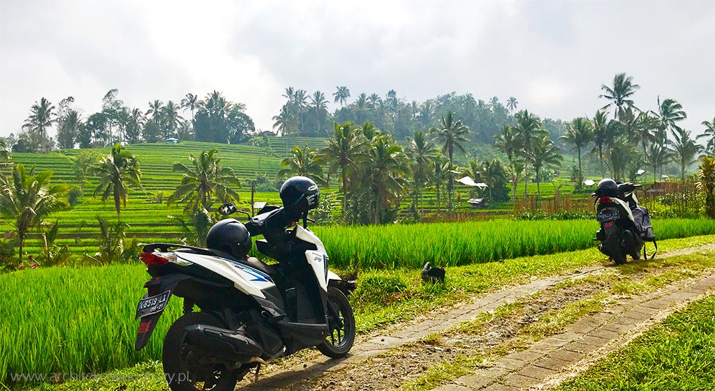 tarasy ryzowe 1 - Bali i Nusa Lembongan
